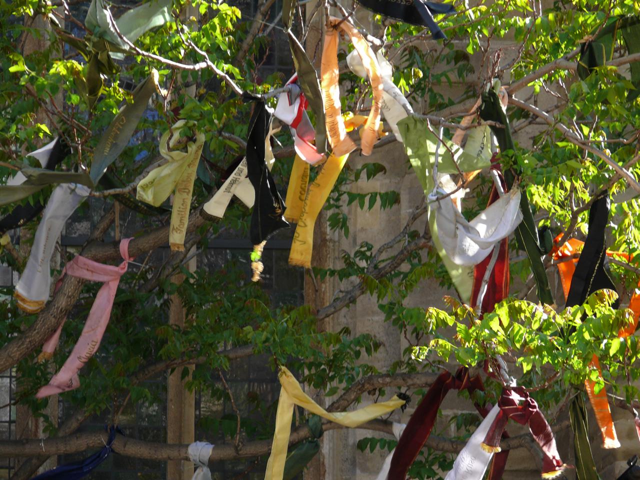 300 Grabschleifen im 29 m hohen Götterbaum